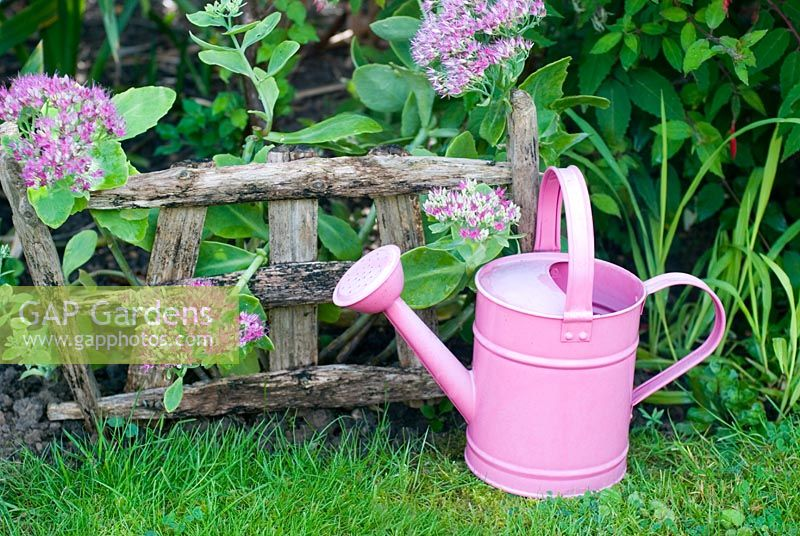 Sedum spectabile  with rustic plant support and pink watering can