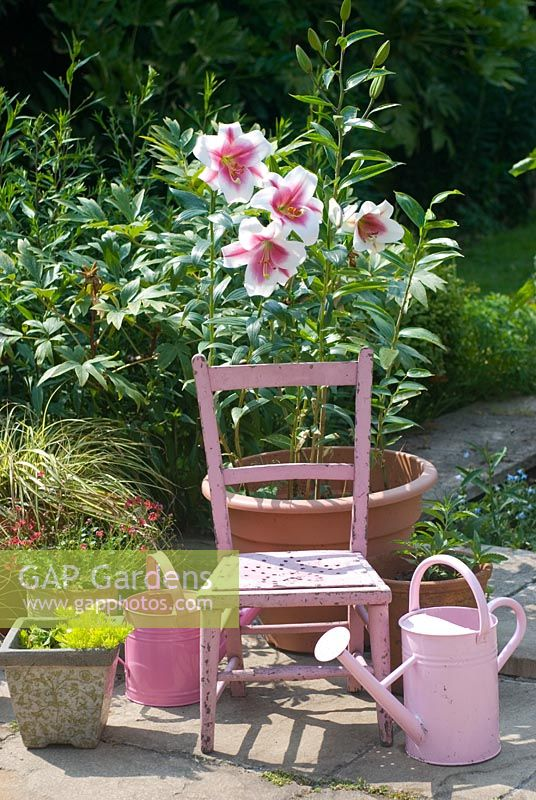 Patio pots with pink watering cans and pink tree Lily in pot