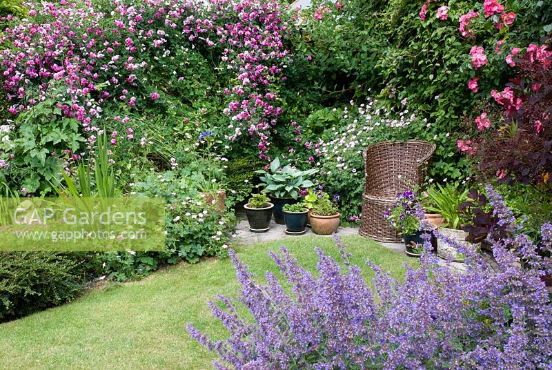 Wicker chair in a cottage garden with Lathyrus latifolius - Everlasting Sweet Pea, Rosa 'American Pillar', Nepeta and Geranium - Dunromin, Somerset
