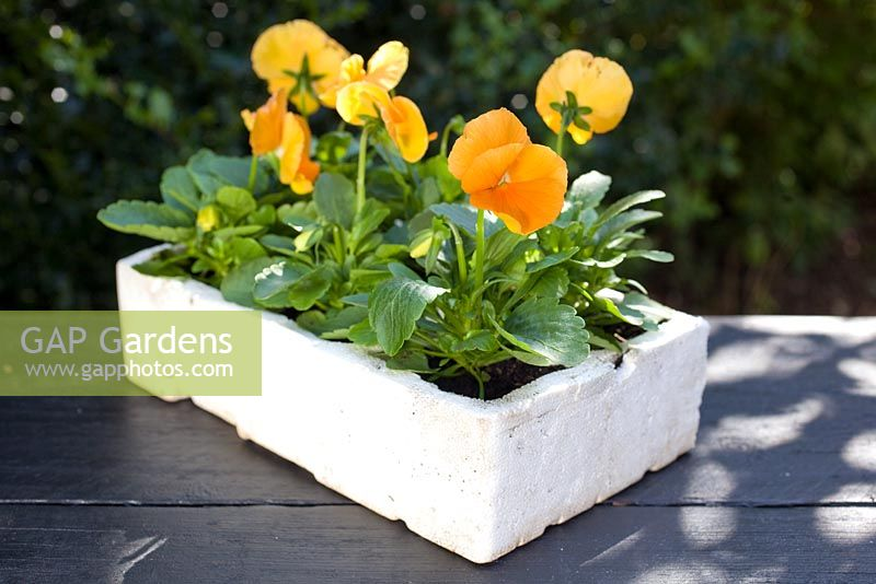 Polystyrene Plant Trays Garden Design Ideas