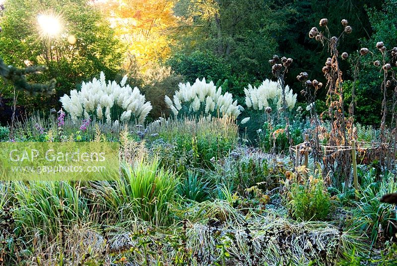 Gap gardens herbaceous and grasses garden features large for Large grasses for gardens