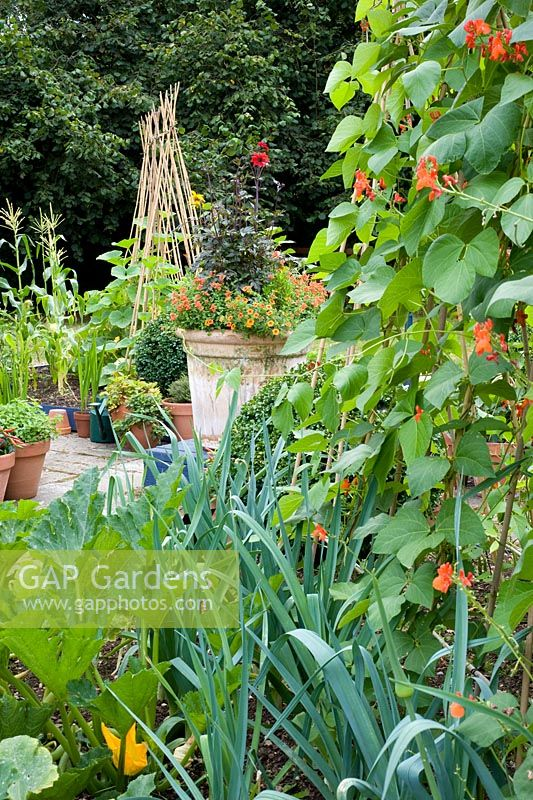 Small vegetable garden with runner beans, leeks and decorative container - Woodpeckers, Essex NGS