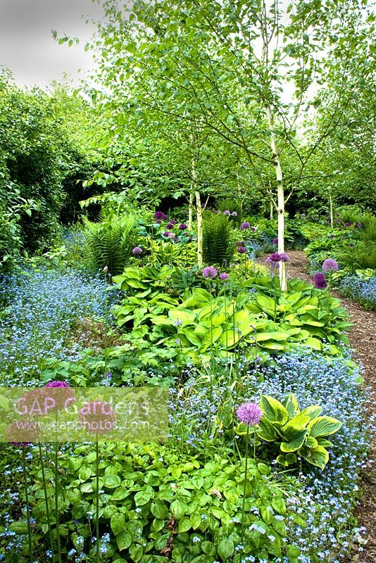 Ferns, Hostas, Forget-me-nots and Allium in the Hosta Walk - Lady Farm