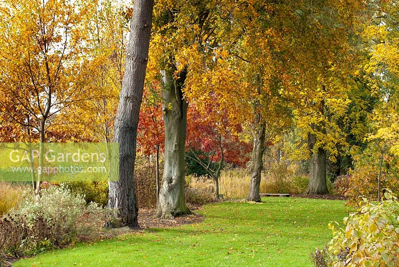 Autumn colour in Adrian's Wood, The Bressingham Gardens, UK.