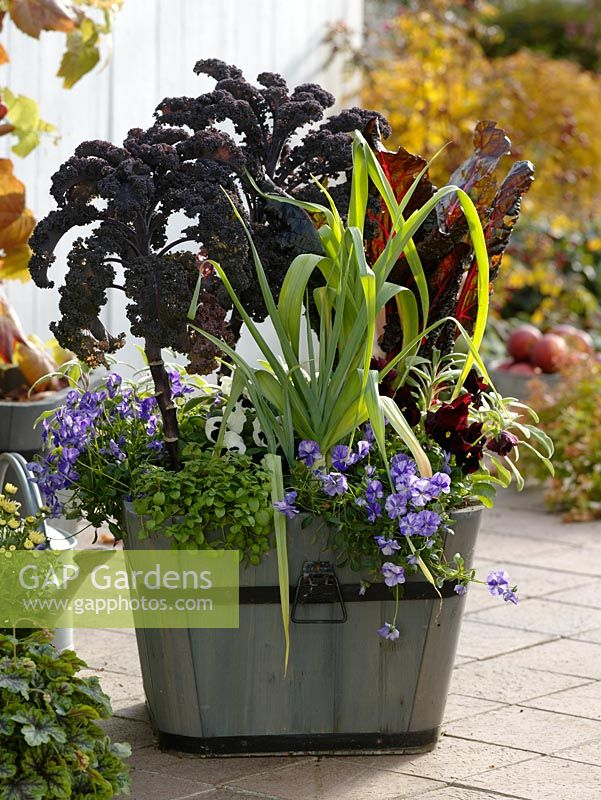 Wooden planter with Brassica oleracea, Allium porrum, chards, Oregano, Viola cornuta 'Columbine', Viola wittrockiana and Salvia