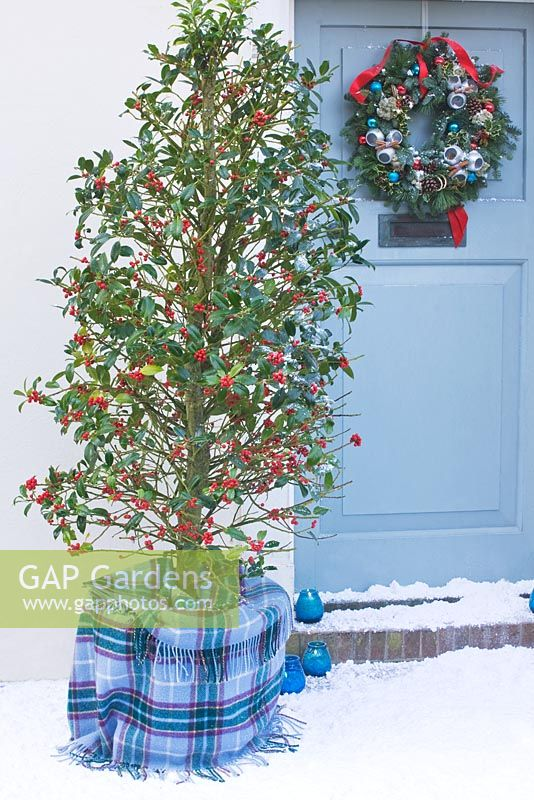 Front door in snow with wreath and Ilex aquilfoliium 'Siberia' in tartan wrapped pot - Highfield hollies, Hampshire
