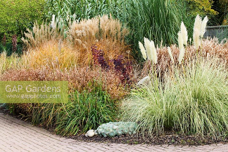 Gap gardens bed of ornamental grasses including for Ornamental grass bed
