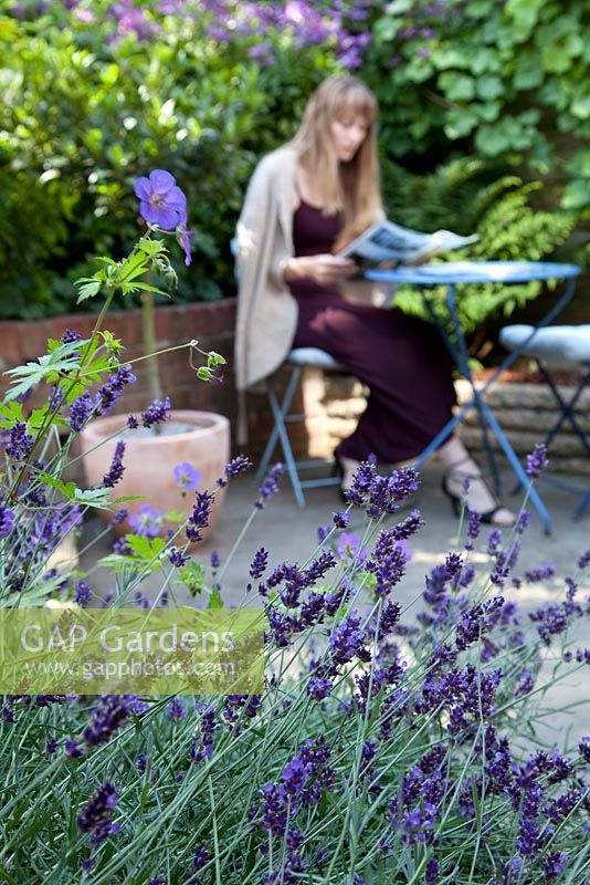 Woman reading on patio, Lavandula 'Hidcote' in foreground
