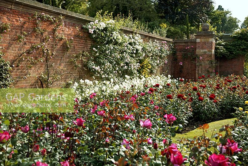 Walled Rose Garden At Hever Castle Kent Uk