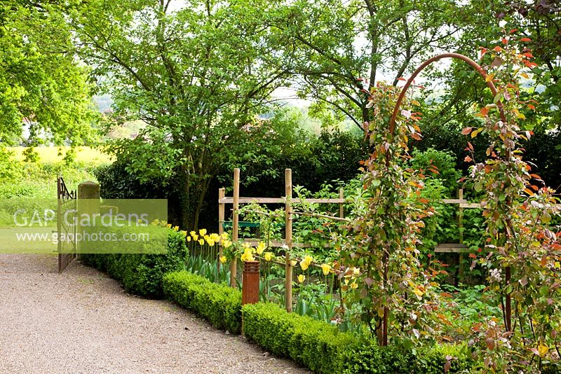 The potager is separated from the gravel driveway by clipped box hedges in different heights and an arch with roses. Planting includes - Amelanchier, Buxus, Rosa and Tulipa 'Yellow Spring Green' - Jens Tippel