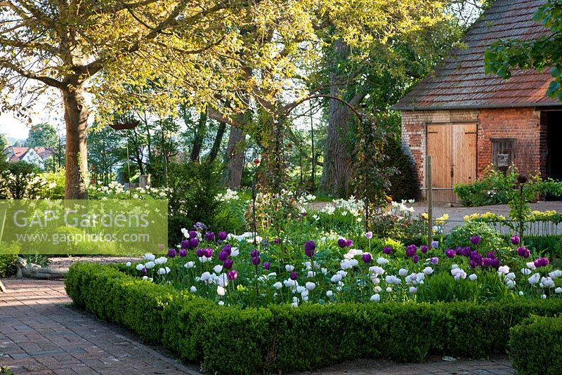 Recently designed garden fits together with the ancient structures as trees and the brick stone barn in the background. Planting includes - Amelanchier, Tulipa 'Ang�lique', Tulipa 'Negrita' and Tulipa viridiflora 'Spring Green' - Jens Tippel