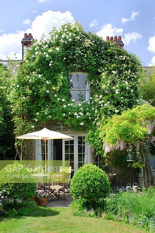 Urban garden with seating area and Rosa 'Madame Alfred Carriere', Rosa banksiae var banksiae and Wisteria floribunda 'Rosea' climbing over house - Cambridge
