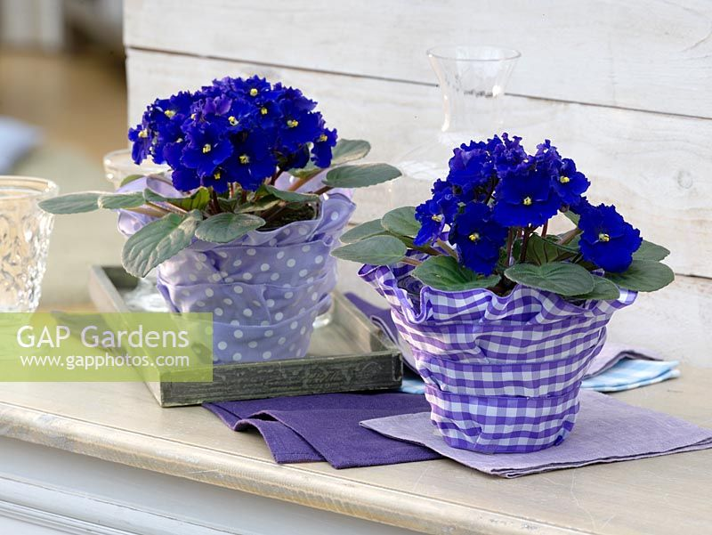 Gap Gardens Decorated Vases Image No 0304033 Photo By