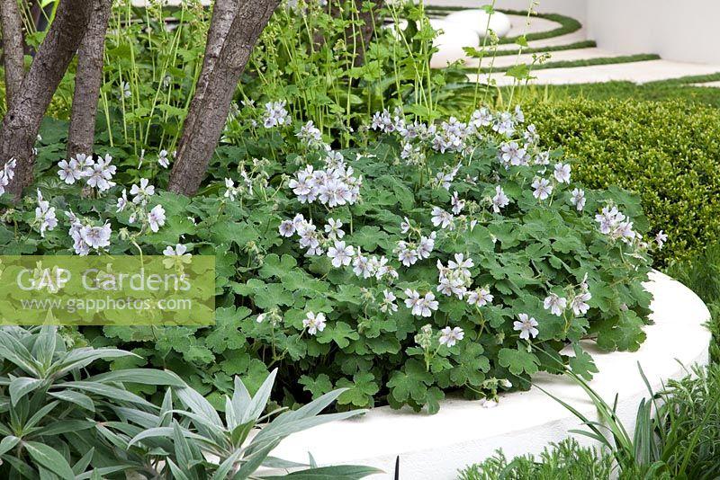zambia plants