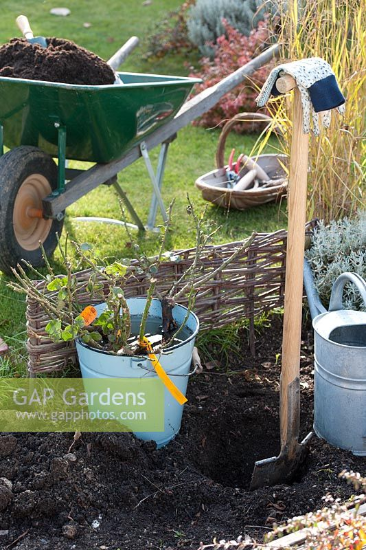 Tools and equipment for planting rose bush