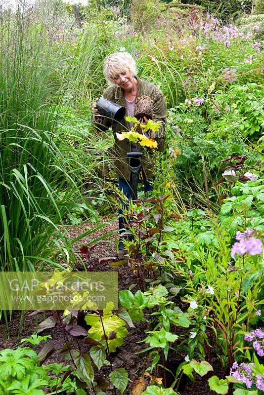 Gap Gardens Taking Root Cuttings From Pot Grown Acanthus