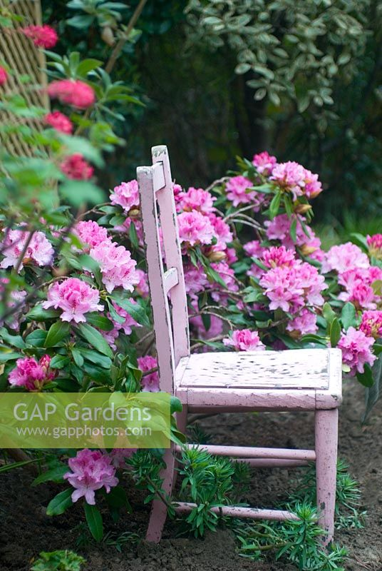 Childs painted vintage pink chair with Rhododendron yakushimanum