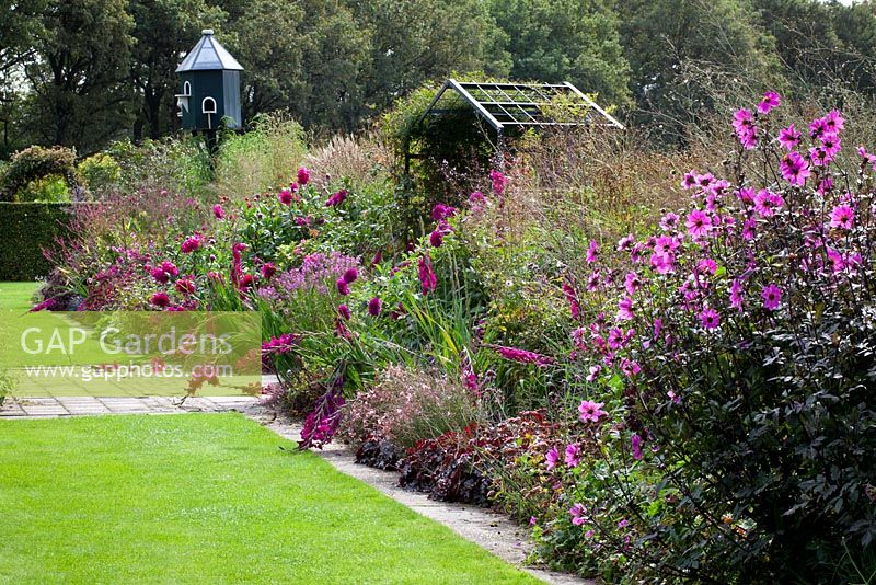The purple border at De Boschhoeve. Dahlia 'Magenta Star', D. 'Jocondo', D.'Le Baron', Cleome Senorita Rosalita and Persicaria amplexicaulis 'September Spires'