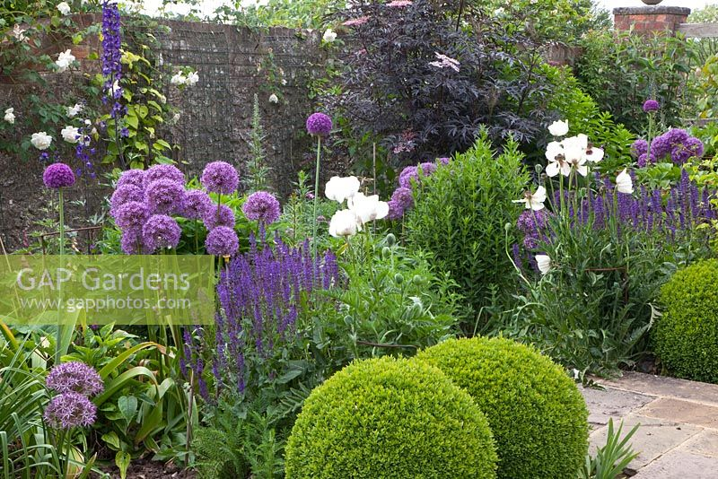 gap gardens purple themed border with alliums salvia nemorosa 39 ostfriesland 39 sambucus nigra. Black Bedroom Furniture Sets. Home Design Ideas