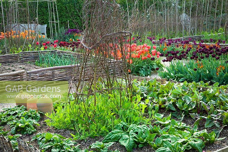 The Vegetable Garden At Perch Hill In Spring Tulips And Salad Beds Woven Birch