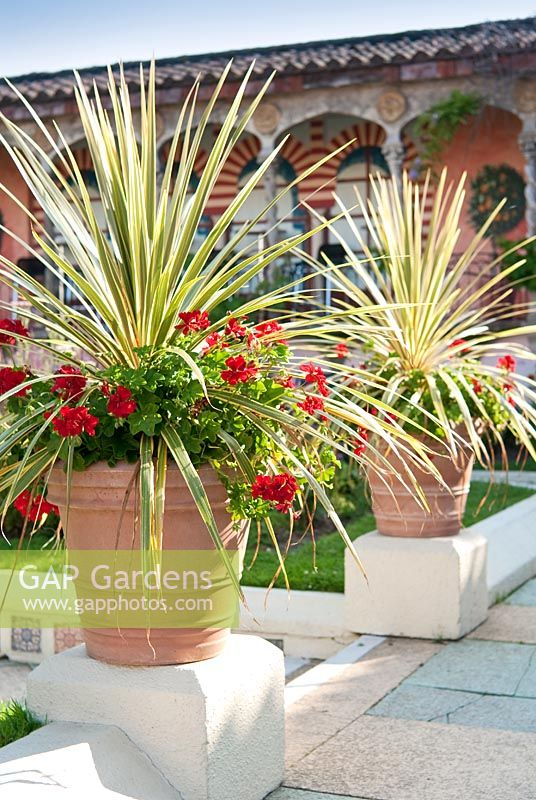 Cordyline and Pelargonium in containers in The Spanish Garden at The Roof Gardens, Kensington