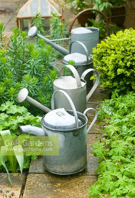 Galvanised watering cans in garden in rain