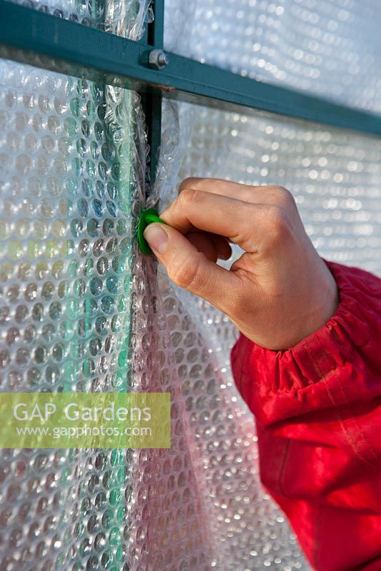 Using plastic pegs to secure bubble wrapping in aluminum greenhouses.