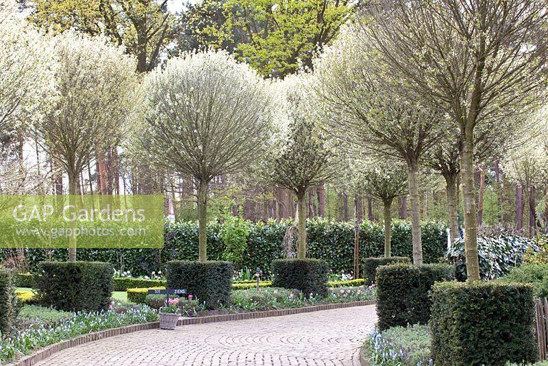 gap gardens tree lined drive with prunus fruticosa. Black Bedroom Furniture Sets. Home Design Ideas