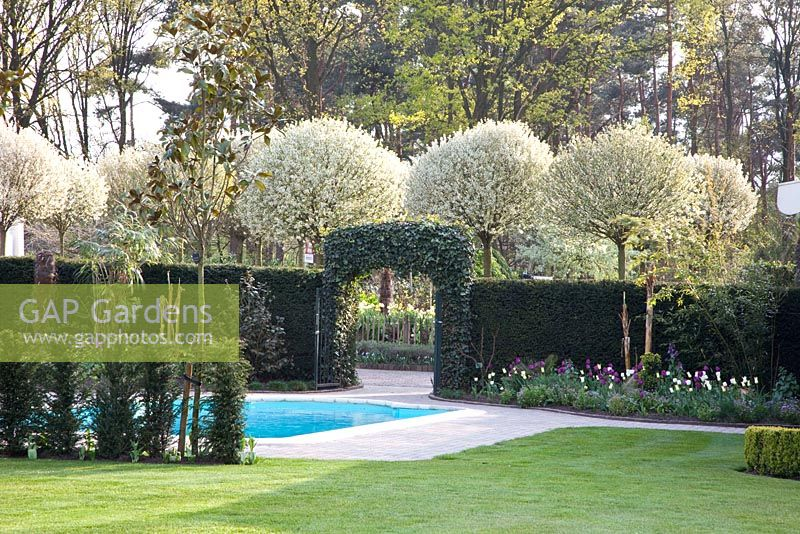 gap gardens archway leading through to tree lined drive with prunus fruticosa 39 globosa. Black Bedroom Furniture Sets. Home Design Ideas