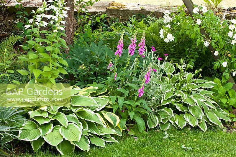 gap gardens rosa 39 bobby james 39 rambler rose campanula. Black Bedroom Furniture Sets. Home Design Ideas