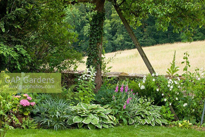 gap gardens rose 39 bobby james 39 campanula latifolia var. Black Bedroom Furniture Sets. Home Design Ideas