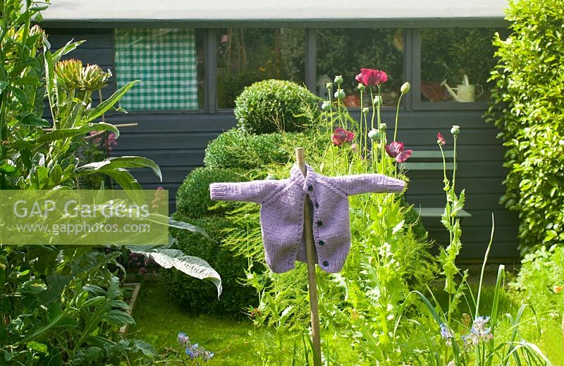 Garden view with vegetable beds, purple shed, topiary box and scarecrow