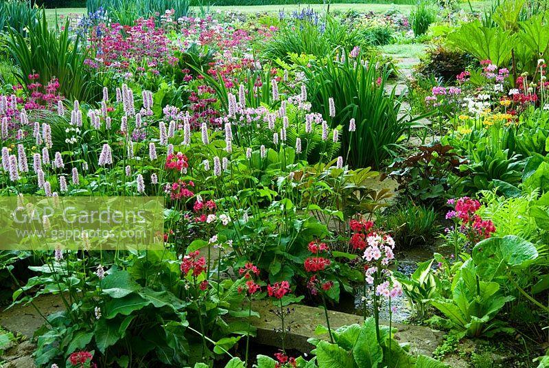 the bog garden full of lush ferns hostas candelabra primulas irises - Bog Garden