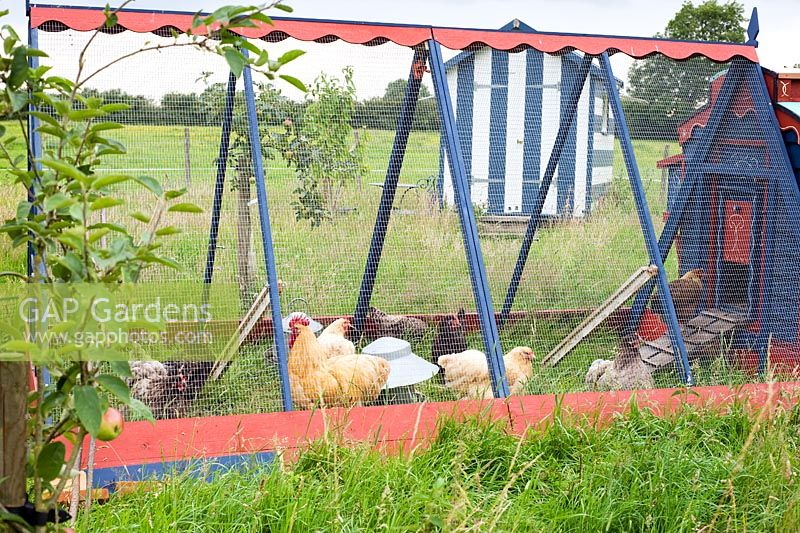 Chickens in painted 'gypsy caravan' style chicken house and run