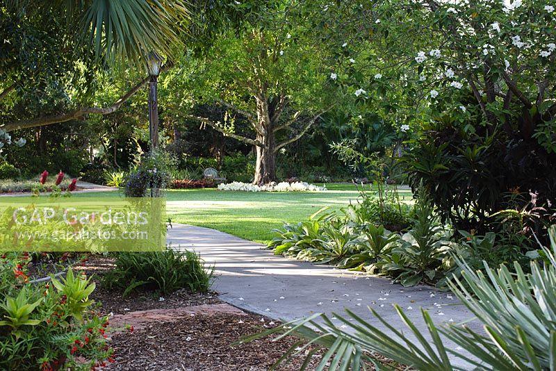 Heathcote Botanical Gardens: A White Geiger, Cordia Boissieri, In Bloom