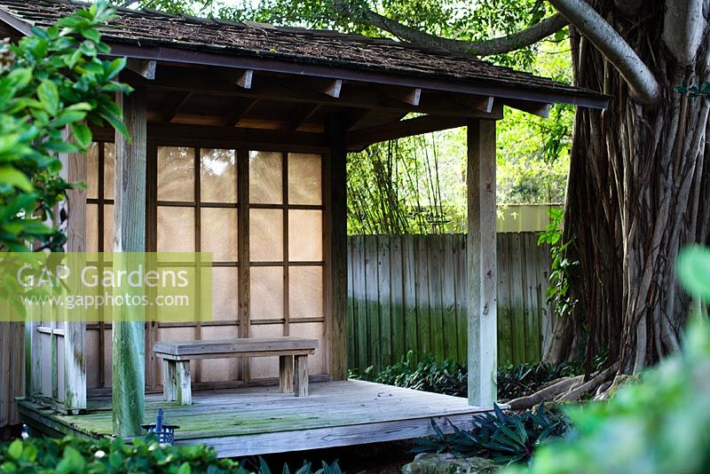 GAP Gardens Japanese garden room with a mature Weeping Fig