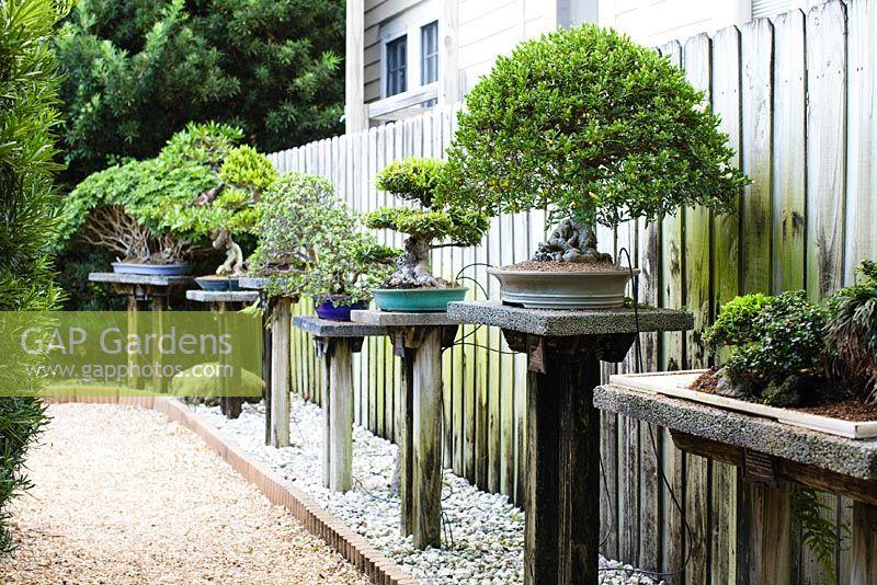 Heathcote Botanical Gardens: Collection Of Bonsais In The Japanese Garden