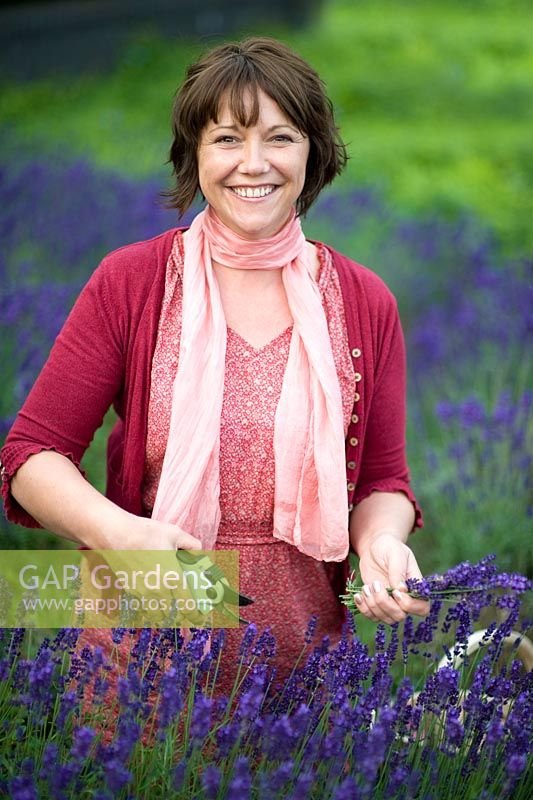 Woman cutting lavender with secateurs