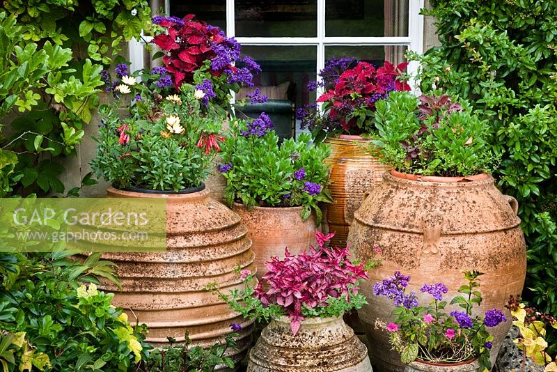 Pots outside the House with flowering plants, Highgrove Garden, September, 2009.