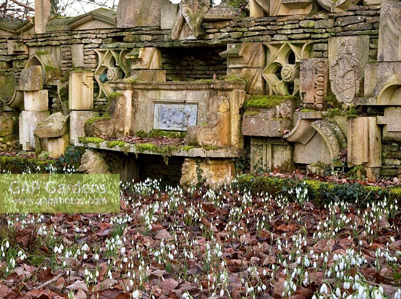 Snowdrops and the 'Wall of Gifts' in the Stumpery, Highgrove Garden, February 2011.