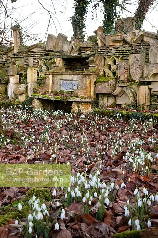 Snowdrops and the 'Wall of Gifts', The Stumpery, Highgrove Garden, February 2011.