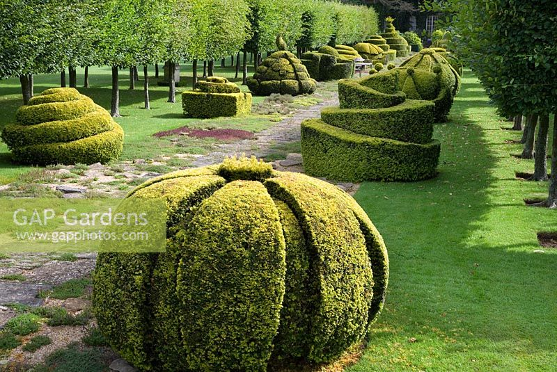 The Thyme Walk with Golden Yew Topiary, Highgrove Garden in August 2007.