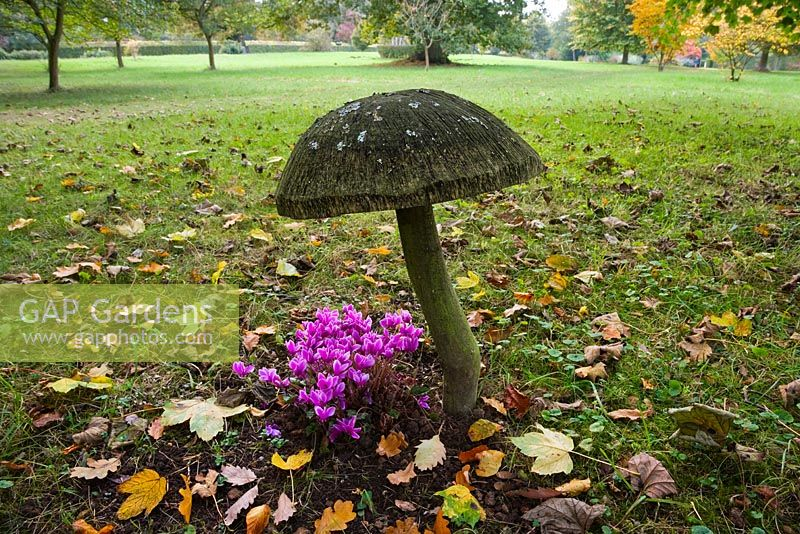 Pink Cyclamen and giant wooden mushroom sculpture in the Stumpery, Highgrove Garden, October 2007.