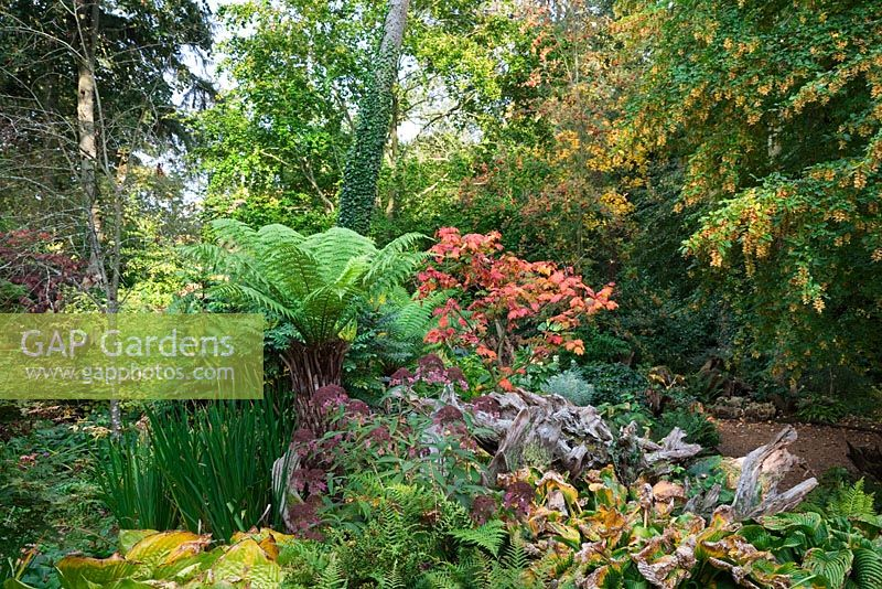 The Stumpery, Highgrove Garden, October 2007.The Stumpery is based on a Victorian concept for growing ferns amongst tree stumps.