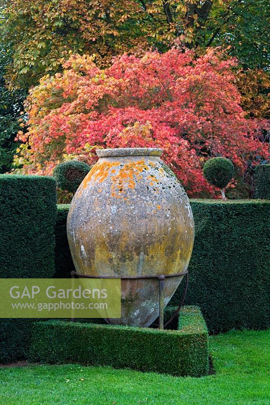 Large Spanish sherry Jar, Meditteranean garden with and acer and autumn foliage. Highgrove Garden, October 2007.