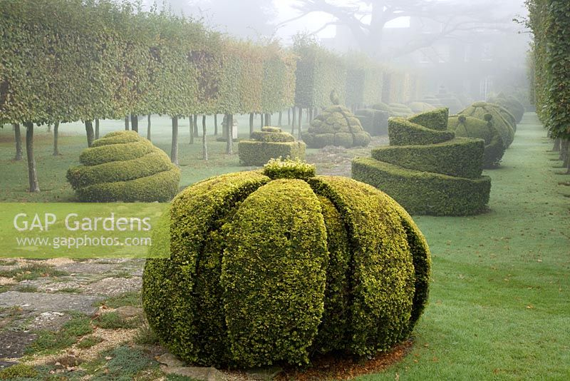 Thyme Walk and Golden Yew Topiary. Highgrove Garden. October 2007.