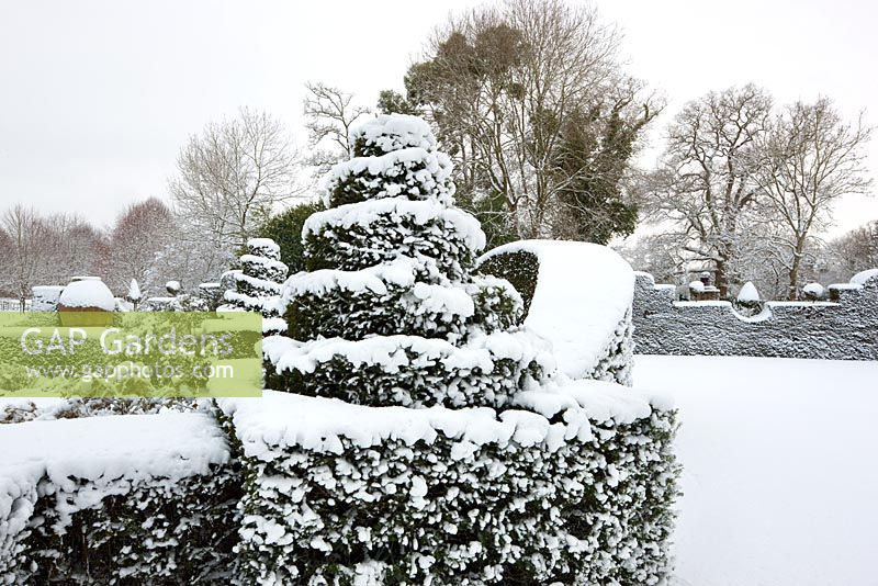 Topiary in snow, Highgrove, January 2010