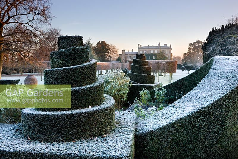 Yew topiary with frost and The House, Highgrove Garden, December 2008.