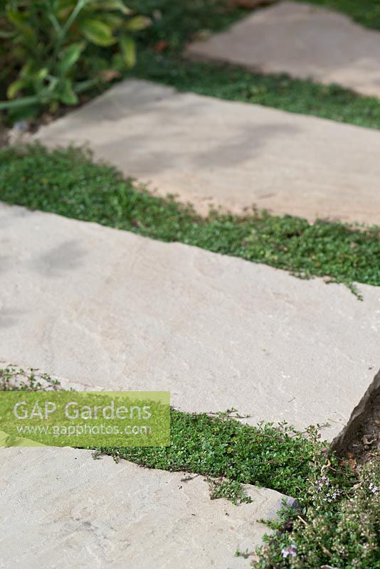 Step by step for planting Thymus 'Goldstream' and 'Russettings' between paving slabs