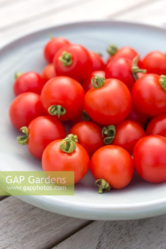 Step by step for growing tomato 'Tumbling Tom Red' -Harvested